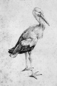 The Storch by Albrecht Dürer (1515)